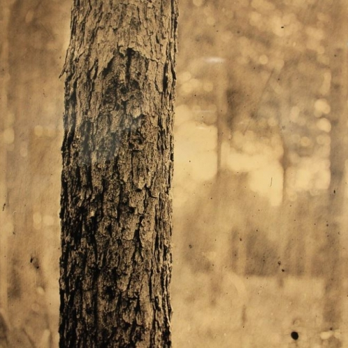 Professor Brooke White's photograph of a tree trunk within a landscape