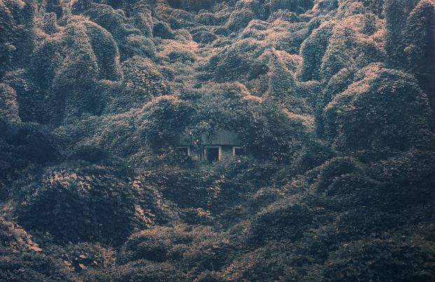 Photo of a house covered in kutzu vines